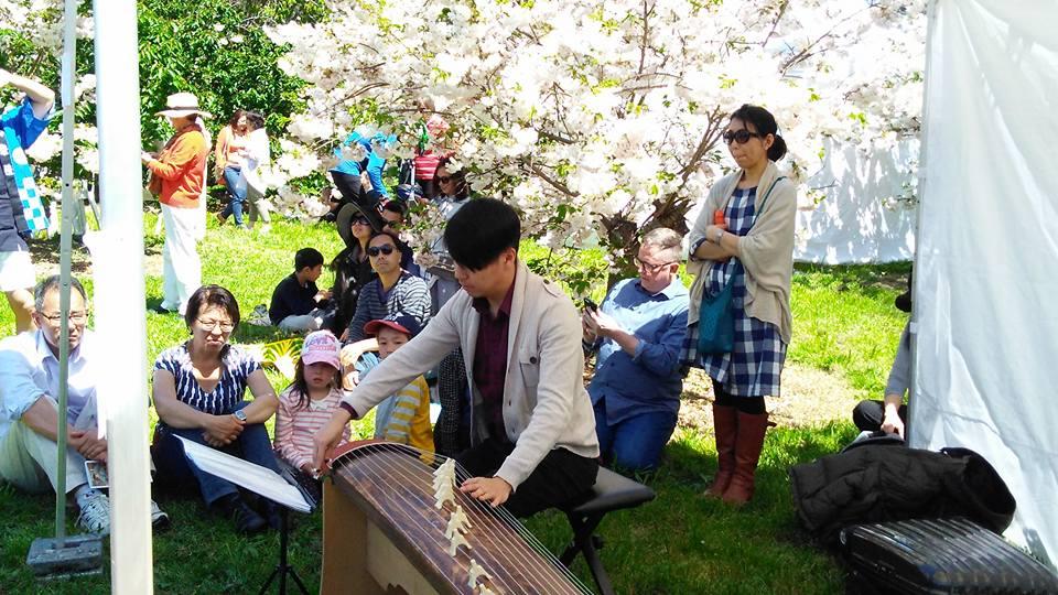 Sakura - Music